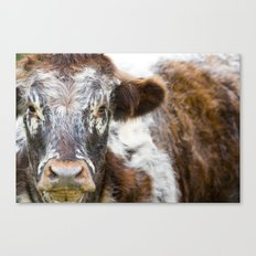 The Young Bull. Canvas Print