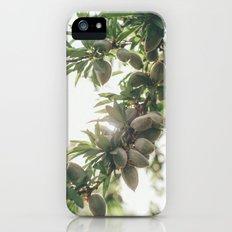 Almond Tree Slim Case iPhone (5, 5s)
