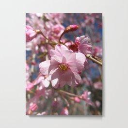 Perfect - Pink Cherry Blossom Metal Print