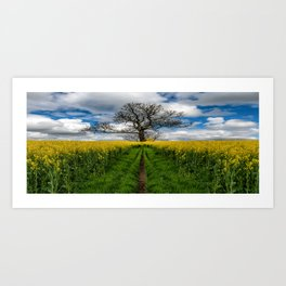 Field Of Rapeseeds Art Print