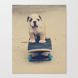 English Bulldog Rollin' Canvas Print