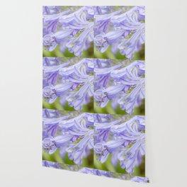 Flowers in the rain Wallpaper