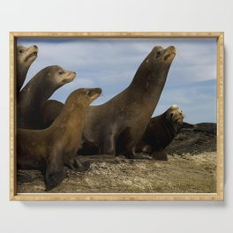 Sea lions Serving Tray