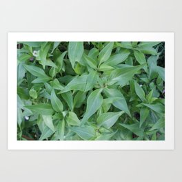 Cornwall Gardens Green Leaves Photo 1774 Art Print