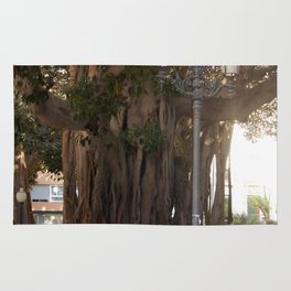 Ancient Trees and Lights Rug