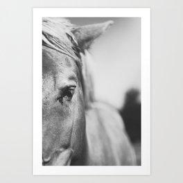 The Spirited Horse Art Print