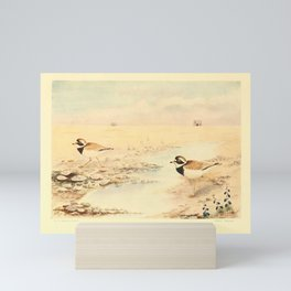 E C Arnold - A Bird Collector's Medley (1907): Ringed Plovers on the Crumbles Mini Art Print
