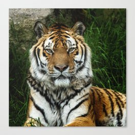 Majestic Fixed Tiger Stare Canvas Print