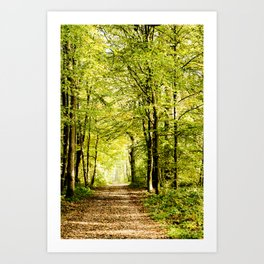 A pathway covered by leaves in a magical forest Art Print