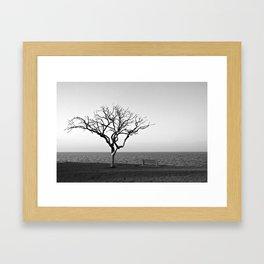 Lonely Tree by Lake Pontchartrain Framed Art Print