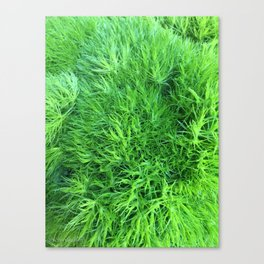 Dianthus Green Trick Canvas Print