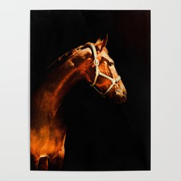 Horse Wall Art, Horse Portrait Over a Black background, Horse Photography, Closeup Horse Head Poster