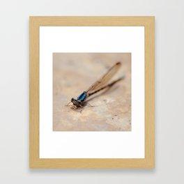 Dragonfly. Framed Art Print