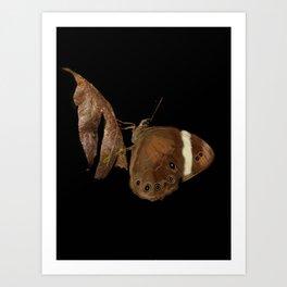 Brown butterfly - 109 Art Print