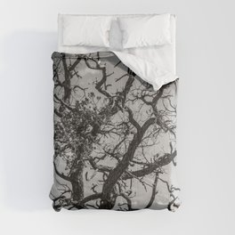 Ancient Tree, Survivor, Alive Comforters
