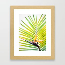 Bird of Paradise and Palm Frond Framed Art Print