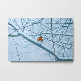 Robin in the cold Metal Print