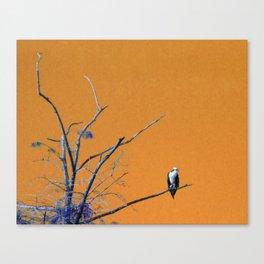 Watching You Like A Hawk Canvas Print