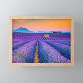Blooming Lavender Field & Sunset Floral Landscape Photograph Framed Mini Art Print
