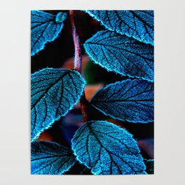 Peacock Blue Leaves Nature Background #decor #society6 #buyart Poster