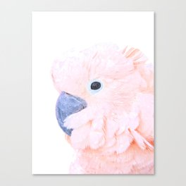 Pink Cockatoo Portrait Canvas Print