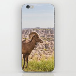 Stand Tall - Badlands Wildlife Photography iPhone Skin