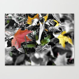colors in contrast Canvas Print