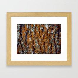Orange Moss Framed Art Print