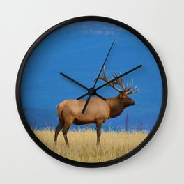 Bull elk in Jasper National Park Wall Clock