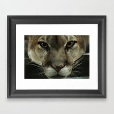mountain lion Framed Art Print