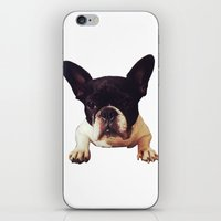 frenchie iPhone & iPod Skins featuring Frenchie by lori