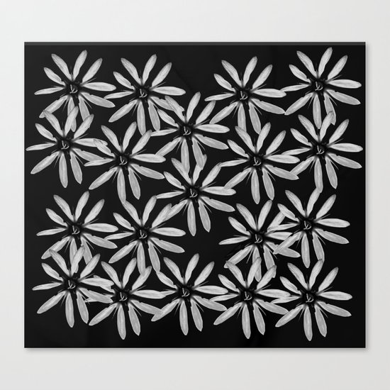 Tiny White Flowers on Black Background Canvas Print