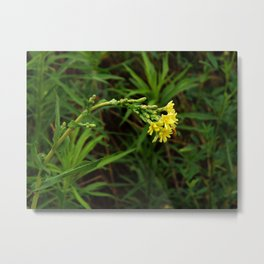 Nodding Flowers  Metal Print