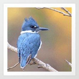 Watercolor Bird, Kingfisher 02, Estes Park, Colorado, Lake Estes Beauty Art Print