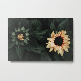 Sunflower Duo Metal Print