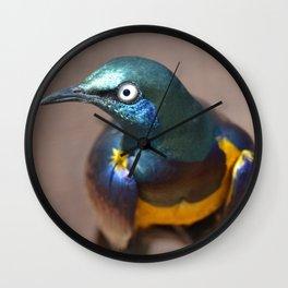 EEB. Golden Breasted Starling Wall Clock