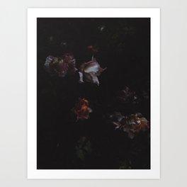 Cold Roses (II) Art Print
