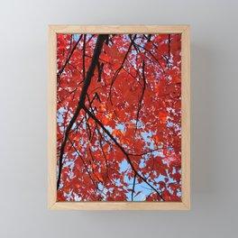 Red Maple Leaves Framed Mini Art Print