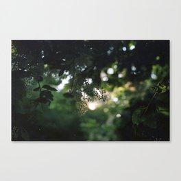 Sunlit Nature Canvas Print