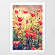 Morning Light - Poppy Field Art Print