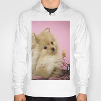 pomeranian Hoodies featuring Pink Pomeranian Brothers by We Speak Puppy