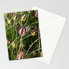LOVE in a Mist - NIGELLA damascena Stationery Cards