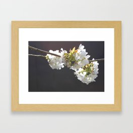 black cherry Framed Art Print