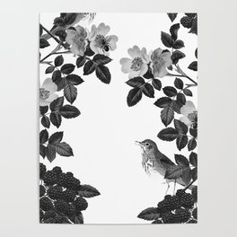 Birds and the Bees Black and White Poster