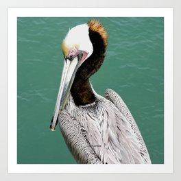Brown Pelican Upstanding Art Print