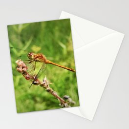 Meadowhawk Dragonfly Stationery Cards
