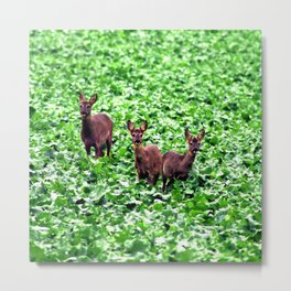 deers in the field. Metal Print