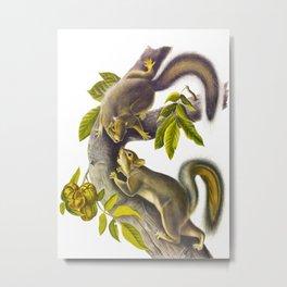Hare Squirrel Vintage Scientific Animal Nature Illustration Metal Print
