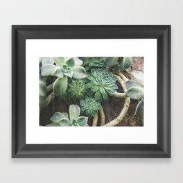 Botanical Gardens Succulent #625 Framed Art Print