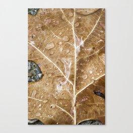 Raindrops on the leaf Canvas Print